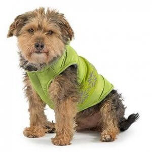 Dog Coats & Dog Costumes