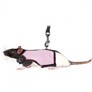 Rat Harness