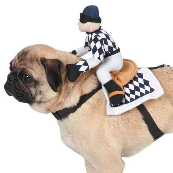 Show Jockey Dog Costume