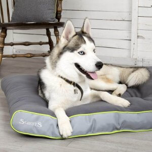 Eco Dog Beds